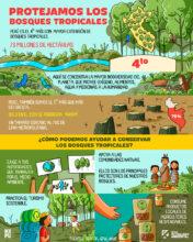 Protejamos los bosques tropicales